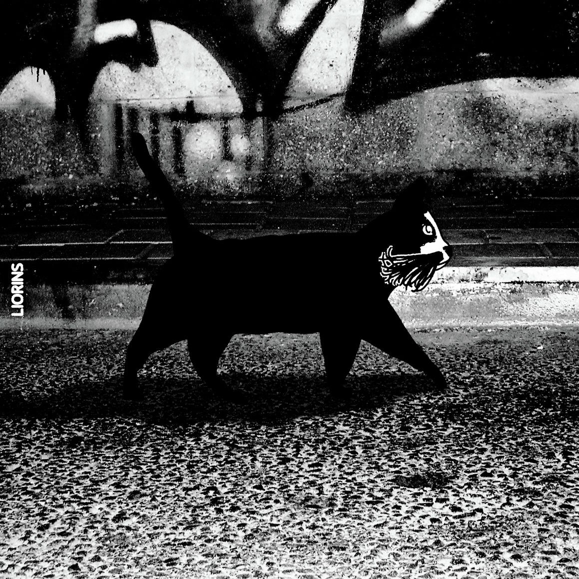 A Cat in a black night 2 - ליאורינס