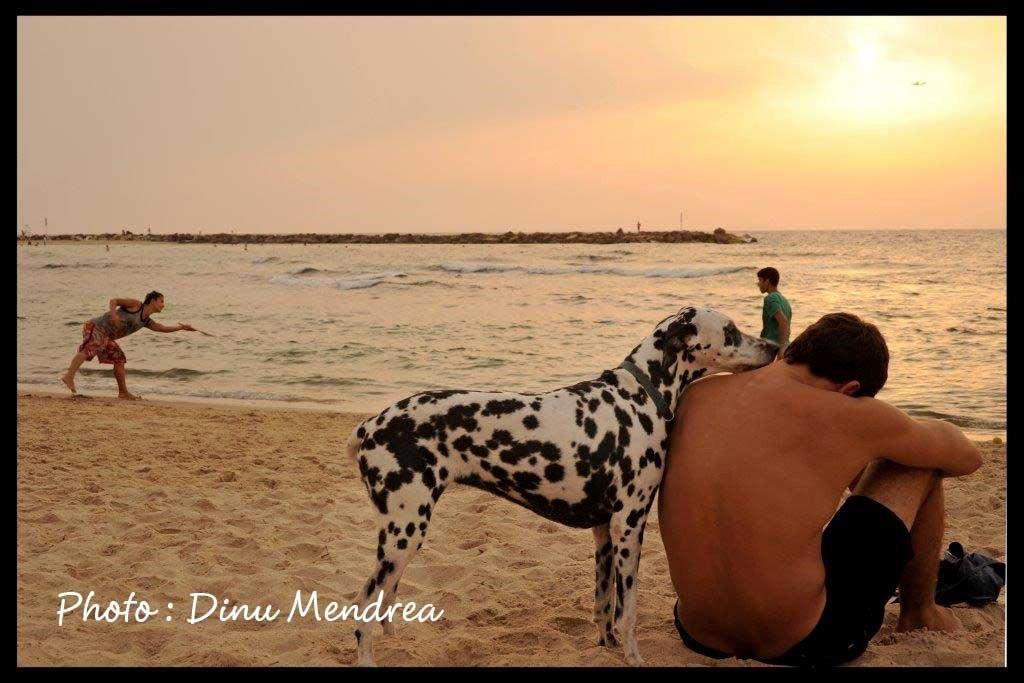 dogs-beach-cdinu-mendrea-1-